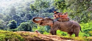 טיול פילים בצ'אנג מאי